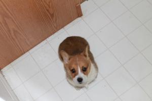 Derek as a puppy:  roughly 10-12 weeks old
